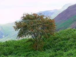 rowan-realtree